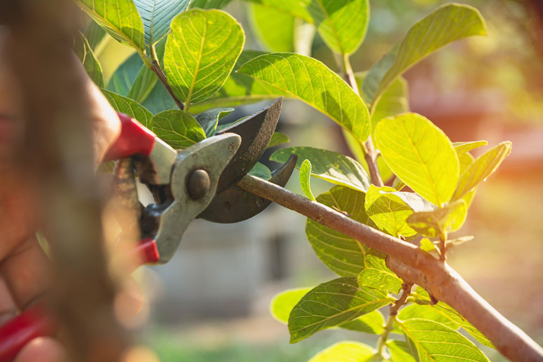 Hire a Pro to Trim Your Trees