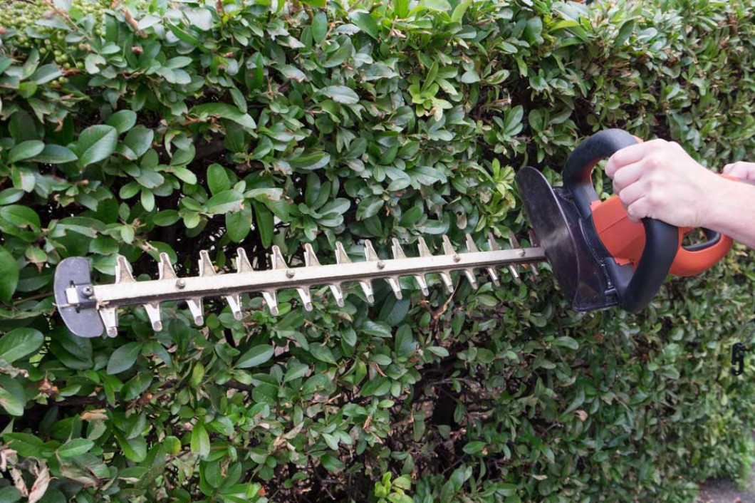 Give Your Shrubs a Makeover