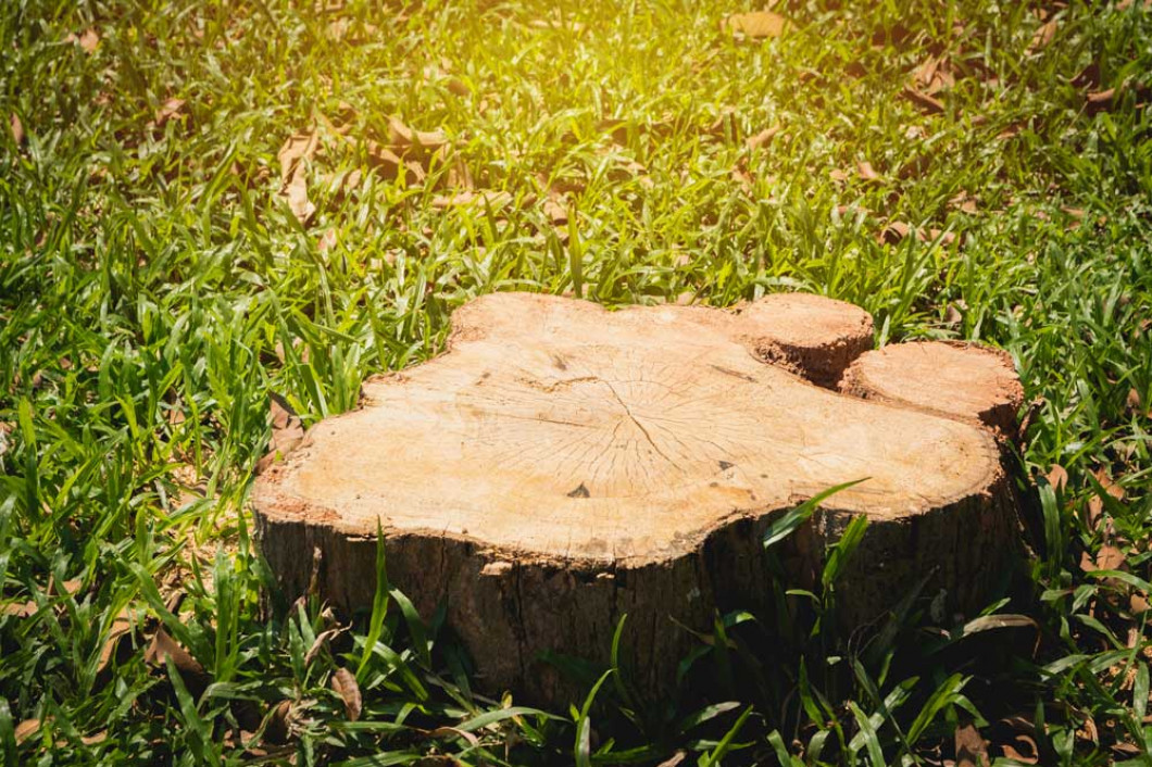 Don't Let Stumps Ruin Your Yard