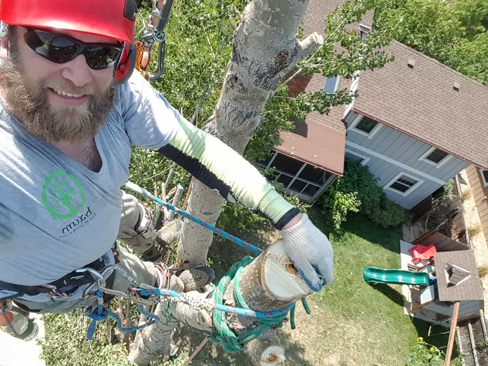 Remove Unwanted Trees With Ease